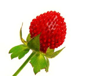 800px-Indian_strawberry444